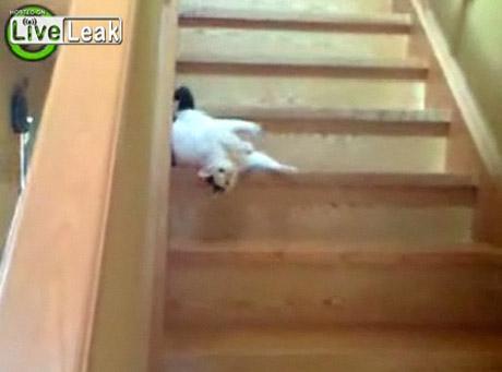 Tak sprytny kot pokonuje schody
