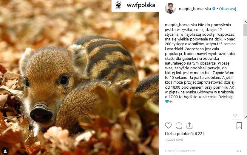Magdalena Boczarska w obronie dzików