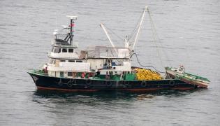 Trawler rybacki