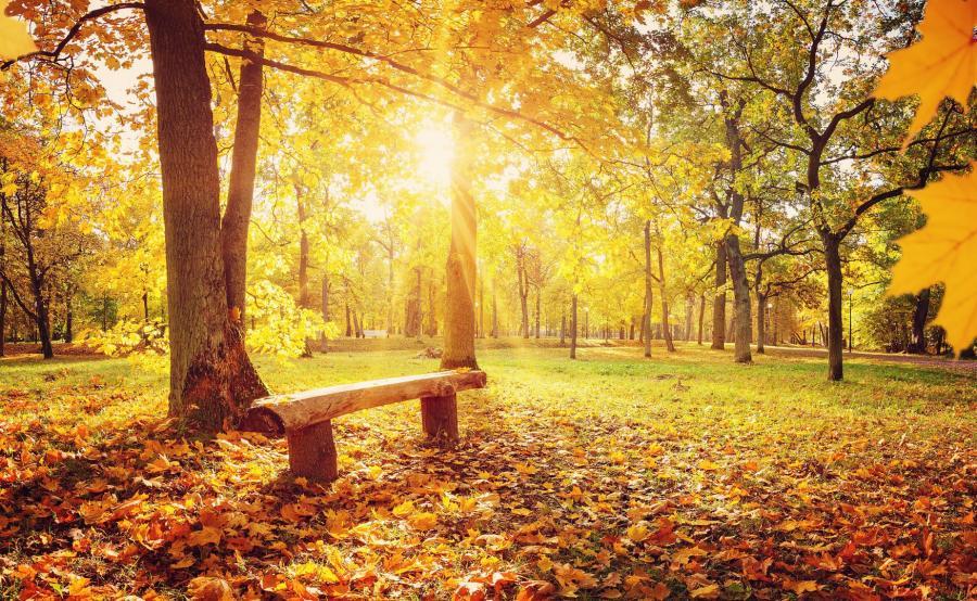 Słoneczna jesień