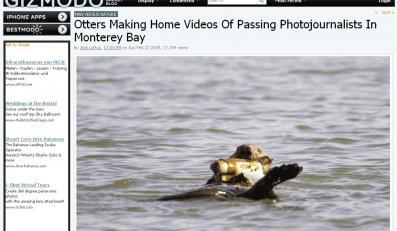Niezwykłe umiejętności wydry, która marzy o Hollywood