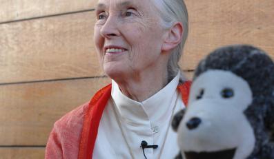 "Bohaterka ""Życia Jane"" –Jane Goodall"