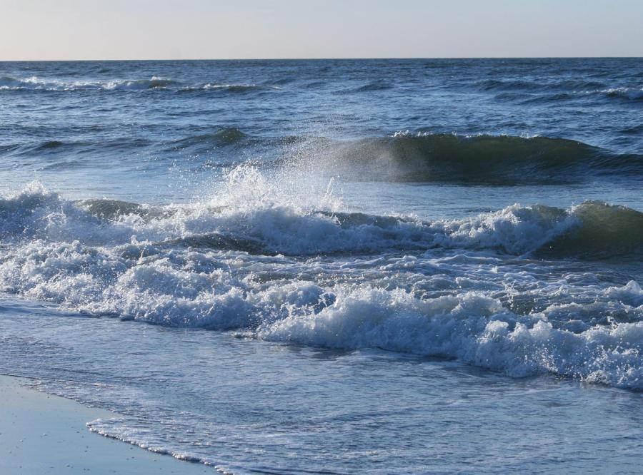 Szwecja i Polska chcą rozwiązać problem glonów na plażach