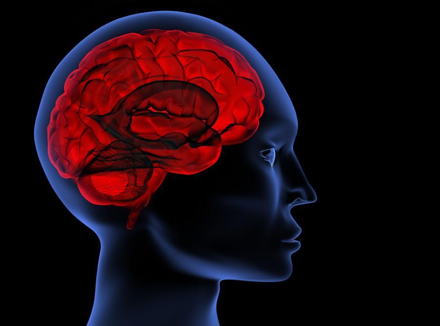 Mózg kobiety jest za duży