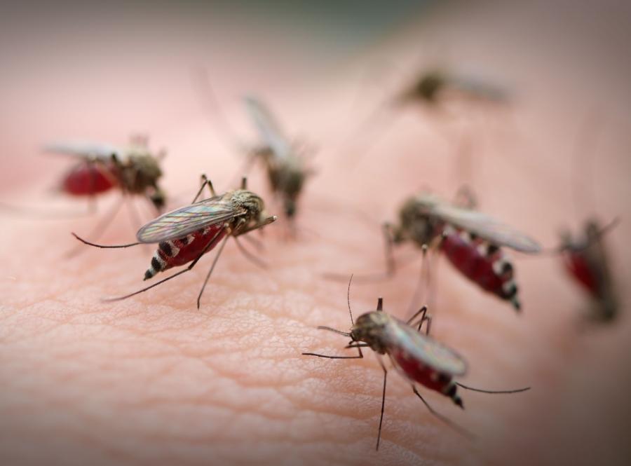 Malaria występuje w ponad 100 krajach