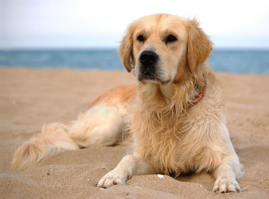 Kynoterapia, czyli leczenie z udziałem psów to coraz bardziej popularna forma terapii