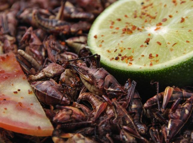 Rynek pełen robaków. Gratka dla smakoszy