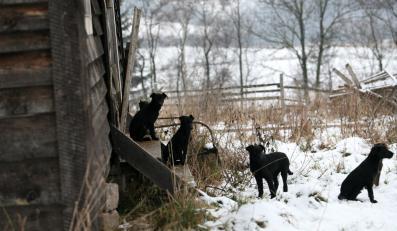 Na posesji znów pojawiają się bezdomne psy