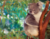 Sympatyczny miś koala
