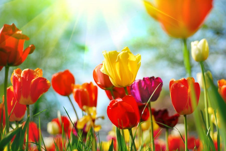 Wiosenne kwiaty - zdjęcie ilustracyjne