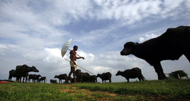 Pasterz i jego stado
