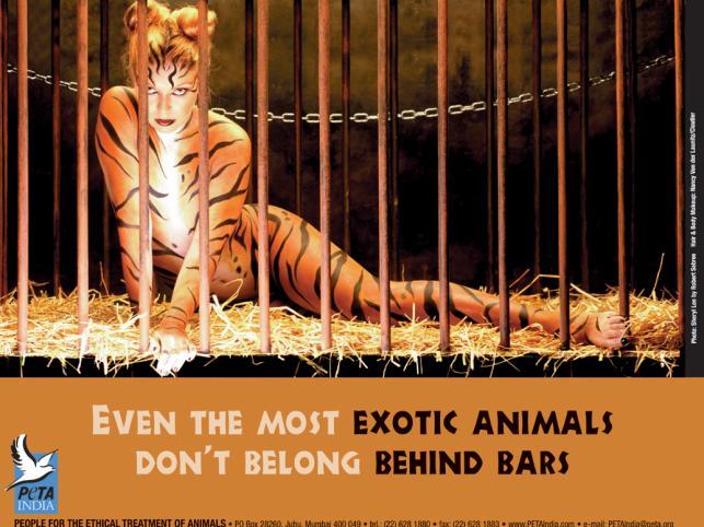 ... czy wykorzystywaniu zwierząt w testowaniu kosmetyków