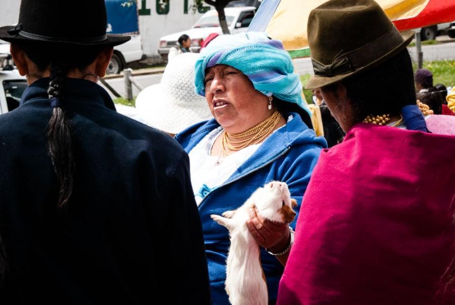Świnka morska przed upieczeniem, rynek w Otavalo, Ekwador; fot. T. Bogusz / Pirania na kolację