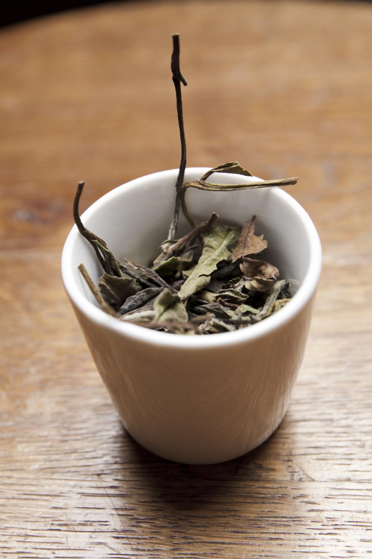 Liście herbaty (fot. Klara Keler)